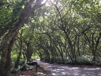 Wai'anapanapa State Park