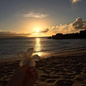 Floarea hawaiiana reprezentativă - Plumeria